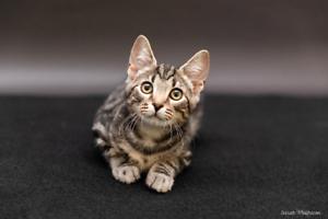 Levi rescue kitten NK2868 VET WORK INCLUDED