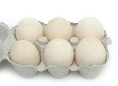 6 Fertilized Hatching Duck Eggspekin  Mallard Ducks