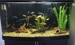90 Gallon Bow Front fish tank for sale!!!!