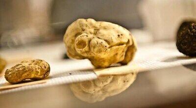 Precious fresh white truffle. Mushrooms,from Italy (white of Alba)120g.4,3 oz.