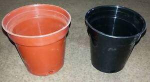 Pots Brand New 100 mm Plastic best quality Wilberforce Hawkesbury Area Preview
