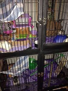 Two level small animal cage