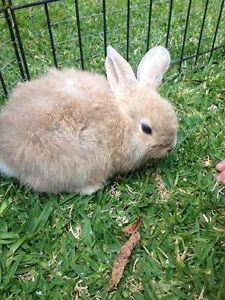 Lost Rabbit Eleebana Eleebana Lake Macquarie Area Preview
