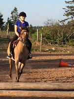Horse Back Riding Lessons 1256 Cow Bay Rd