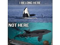 Supporters Of Animal Welfare Needed! Stop Orca Abuse Demonstration