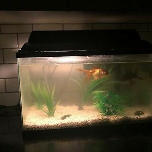 Full set fish tank