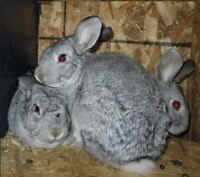 Beautiful Friendly Bunnies to Good Homes ONLY