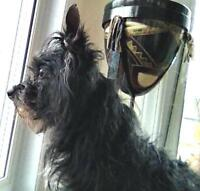 """Adult Male Dog - Terrier: """"Shadow"""""""