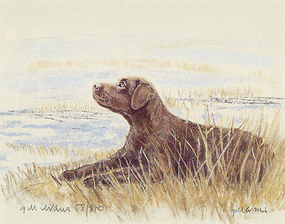 """LABRADOR RETRIEVER CHOCOLATE DOG LIMITED EDITION PRINT - """"Laying in the Rushes"""""""