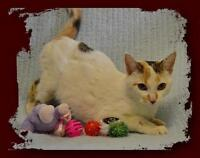 """Adult Female Cat - Calico: """"Darby"""""""