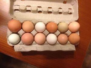 Fresh farm eating eggs for sale