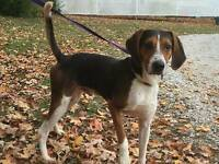LUKE is a 1 year old, Male, hound mix