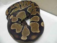 snake,s