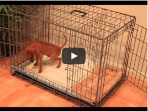 Cage for Small Dog/Puppy