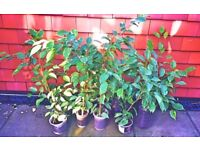 Different trees and plants indoor from £3