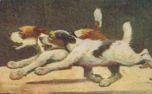 Old Postcard 2 Wire Fox / Jack Russell Terrier Dogs Kemper Thomas Co USA c1908