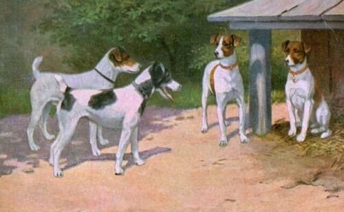 Rare Postcard Four Smooth Fox Terrier Dogs Netherlands c1910