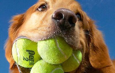 (50) Good Used Tennis Balls!!!!!!!
