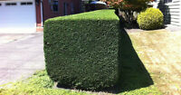 HEDGE TRIMMING UP TO 20FT AND LANDSCAPING SERVICE