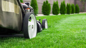 PROMOTION!! LAWN CARE - LAWN MAINTENANCE - LANDSCAPING