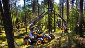 Consultant forestier, coupe de bois