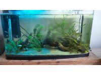 120l Tropical Fish Tank
