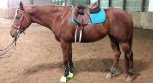 16 hh Mare for Part Board
