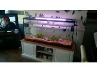 LARGE FISH TANK - GREAT VALUE!