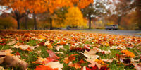 Fall Landscaping, Lawn Care and Yard Maintenance