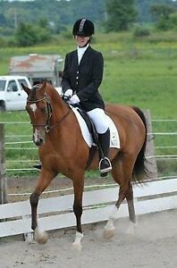 Winter + paid lease - Dressage horses