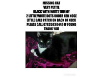 missing cat langdon hills area