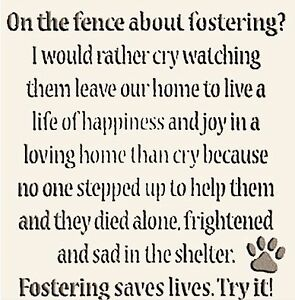 Foster Families Needed - DIBS rescue Oakville / Halton Region Toronto (GTA) image 3