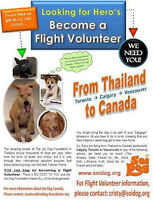 Dogs/Cats: Flight Volunteers to bring rescued pets from Thailand