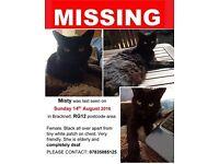 ELDERLY BLACK CAT MISSING IN RG12 BRACKNELL AREA