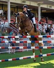 TWO STAR EVENTER FOR SALE Baldivis Rockingham Area Preview