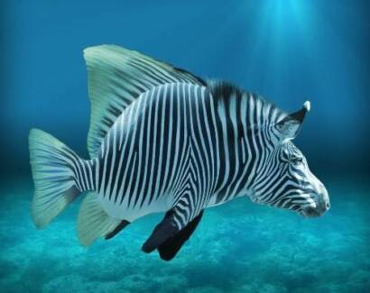 African Cichlids +you will receive bonus Fairfield Fairfield Area Preview
