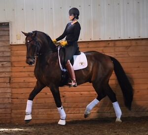 Horse boarding at dressage barn Strathcona County Edmonton Area image 1