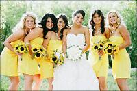 WEDDING PHOTOGRAPHY WINNIPEG $850