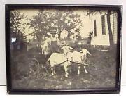 Vintage Goat Cart