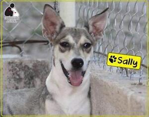 """Young Female Dog - Husky: """"Sally"""""""