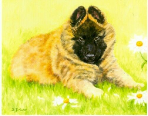 Belgian Shepherd Tervuren Limited Edition Puppy Art Print Where