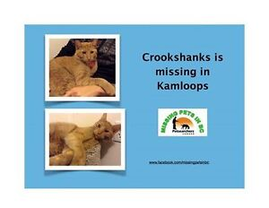 Our Beloved pet is missing