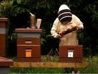 Organic & Raw Honey (Heather) small beekeeper from Dumfries, South West Scotland