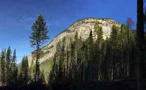 5 to 10 Acre Lots in the Blaeberry Valley Revelstoke British Columbia image 4