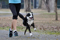 Do you have a friendly pet that desperately needs some exercise?