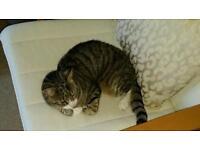 Missing Cat Colehill
