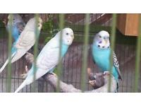 Lots of birds for sale