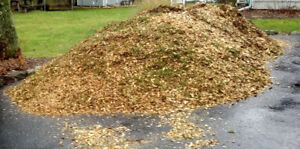 WOOD CHIPS / MULCH