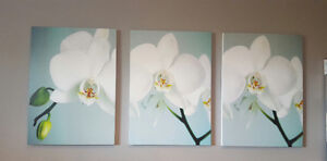 Beautiful set of 4 orchid prints
