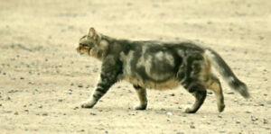 Found grey/brown cat with circular markings east Peterborough